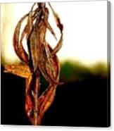 Twist Plant Canvas Print