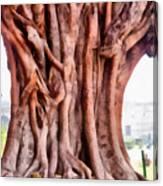 Twisted Gnarled Tree Canvas Print