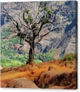 Twisted Tree, Wiamea Canyon, Kawai Hawaii Canvas Print