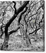 Twisted Woodland Canvas Print