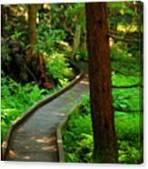 Twisting Path Through The Woods Canvas Print