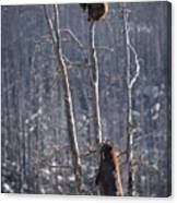 Two Bears Up A Tree Canvas Print