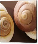 Two Brown Shells Canvas Print