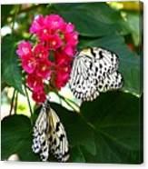Two Butterflies Canvas Print