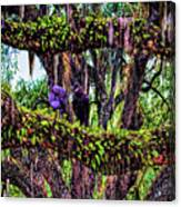 Two Buzzards In A Tree Canvas Print