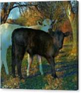 Two Calfs Canvas Print