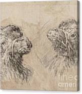 Two Camel Heads [recto] Canvas Print