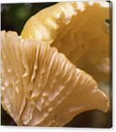 Two Cantharellus Canvas Print