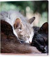 Two Cats  Sleeping  Canvas Print