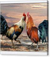 Two Cocks Head To Head Canvas Print