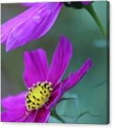 Two Cosmos Canvas Print