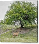 Two Cows And A Tree Canvas Print