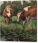Two Cows By A Pond Canvas Print