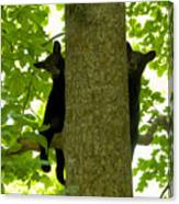 Two Cubs Canvas Print