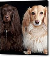 Two Dachshunds Canvas Print