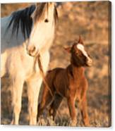 Two Days Old Canvas Print