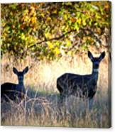 Two Deer In Autumn Meadow Canvas Print