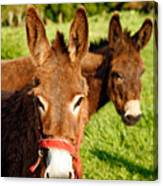 Two Donkeys Canvas Print