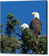Two Eagles Canvas Print