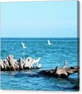 Two Egrets Canvas Print