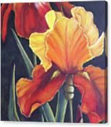Two Fiery Iris Canvas Print