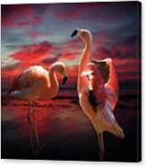 Two Flamingos Canvas Print