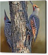 Two Flickers Canvas Print