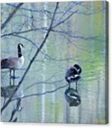 Two Geese On A Lake Canvas Print