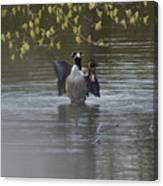 Two Geese On A Pond Canvas Print