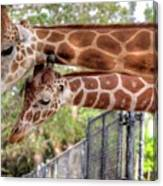 Two Giraffes Canvas Print