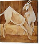 Two Goats In Sepia Canvas Print