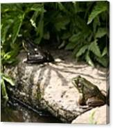 Two Green Frogs Canvas Print