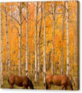 Two Horses Grazing In The Autumn Air Canvas Print
