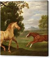 Two Horses In A Landscape Canvas Print