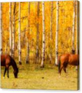 Two Horses In The Colorado Fall Foliage Canvas Print