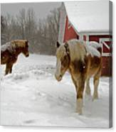 Two Horses In Winter Canvas Print