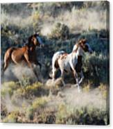 Two Horses Running Canvas Print
