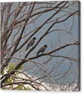 Two If By Tree Canvas Print