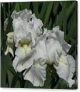Two Irises Canvas Print