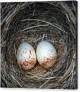 Two Junco Eggs In The Nest Canvas Print