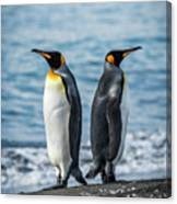 Two King Penguins Facing In Opposite Directions Canvas Print
