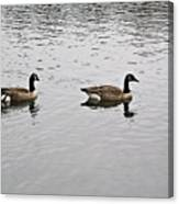 Two Lovely Canadian Geese Canvas Print
