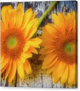 Two Lovely Sunflowers Canvas Print