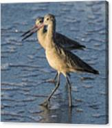 Two Marbled Godwits Canvas Print