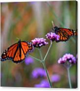 Two Monarchs Sharing 2011 Canvas Print