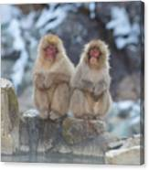 Two Monkeys Canvas Print