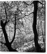 Two Monochrome Tress Canvas Print
