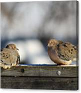 Two Mourning Doves Canvas Print