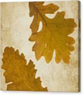 Two Oak Leaves  Canvas Print