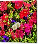 Two Of Dandelion. Floral Carpet. Canvas Print